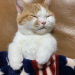 sleeping_baby_cat