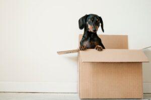 dog_in_a_box