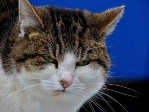 悪い顔をしている猫の画像